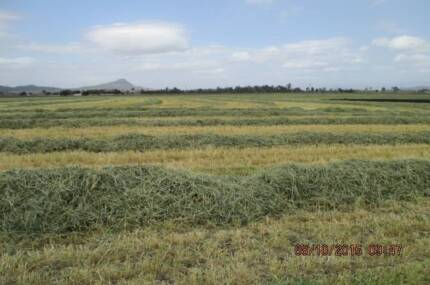 Hay (Prime Barley) Small sq ans large square bales from the farm Rosewood Ipswich City Preview