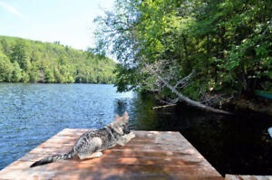 2.5 acres of waterfront-525ft frontage only 30mins from Ottawa