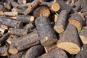 Free Firepit Firewood Wanted (Rounds)