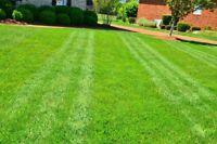 LAWN CARE/ GRASS CUTTING SERVICE