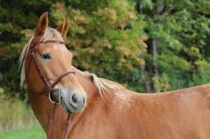 Large pony for lease