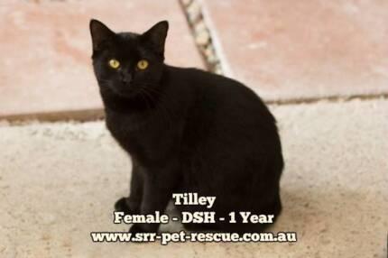 Tilley - Soquilichi Rescue