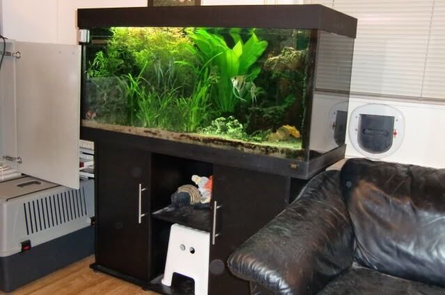 juwel rio 300 marine tropical fish tank with full setup delivery installation in hendon. Black Bedroom Furniture Sets. Home Design Ideas