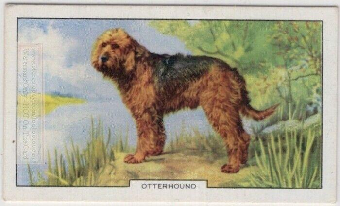 Otterhound  Dog Canine Pet 1930s  Ad Trade Card