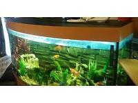 4ft aquarium fish large tank