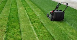 GRASS CUTTING professional service
