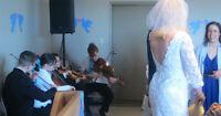 Quantello Strings (Quartet, Trio, Duet) for Spring/Summer Events