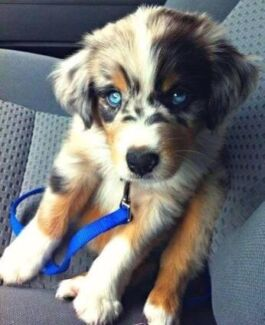 Wanted: Wanting puppy
