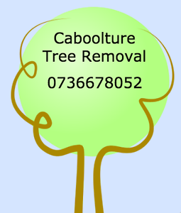 Caboolture Tree Removal Victoria Point Redland Area Preview