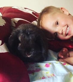 Two lovely rabbits