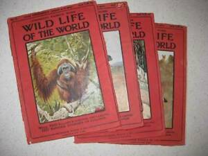Wildlife Antique - Magazines x 4
