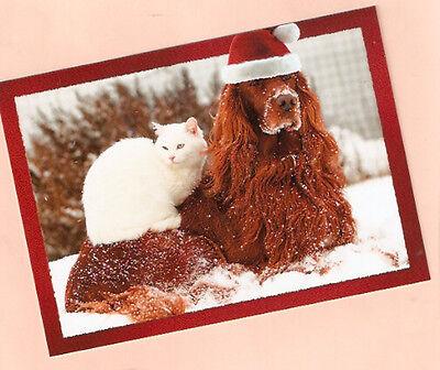 Irish Setter and Cat Kitten Santa Hat Christmas Cards Box of 12 Irish Santa Hat