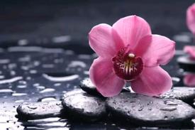 YinYang Therapeutic Massage