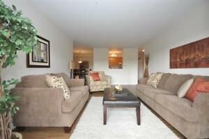 Large, Updated 3BR in Clayton Park! Bright + Close to Transit!