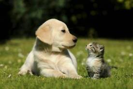 Dog & Cat sitting, Dog walking