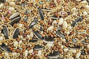 Bird Seed Available at The Old Co-op!!
