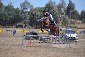Exceptional Performance gelding Crace Gungahlin Area Preview
