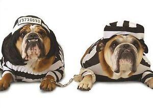 service de prommade pour chien
