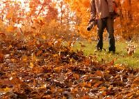 Fall Leaf Cleanups - Starting at $45