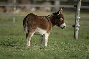 Looking to purchase friendly Donkey