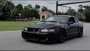 Looking for an 03/04 mustang cobra