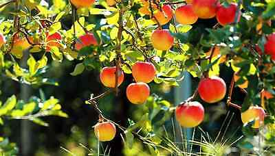 40 Books How to Grow Fruit Tree Planting Pruning Grafting Growing Tree on (How To Grow Plants)