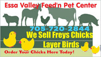 "Essa Valley Feed Store ""Day Old Chicks+  Ready to Lay Chickens"""