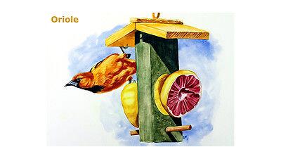 Oriole ACEO PRINT on wood block orange bird painting Sandrine Curtiss art  Art Block Paper Painting
