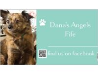 "DANA'S ANGELS FIFE ""SANTA PAWS"" PARTY"