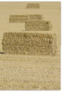 Large Square Bales of Hay and Straw For Sale