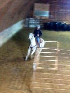 Horse clinicians