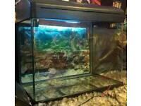 Fish Tank Aprox 90 litres