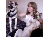 Available Dog Walker / Pet Sitter / Personal Assistant / Help Shopping, Housekeeping & Elderly Care