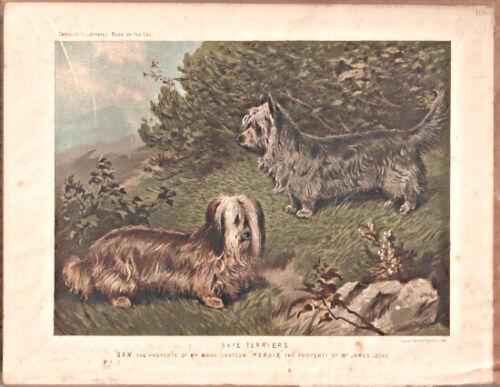 Vintage Art Print Skye Terrier from Cassell