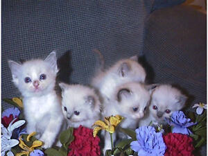 5 KITTENS FOR SALE - CHEAP - TEXT FOR DETAILS