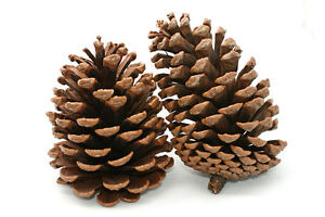Crafting Pine Cones