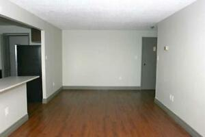 2 bedrooms for the price of 1! PLUS ONE MONTH FREE! Kitchener / Waterloo Kitchener Area image 9