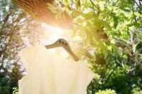 Inexpensive Professional Wedding Photographer