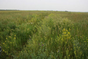 6 % LEASE on $OLID SASKATCHEWAN PASTURE - FOR SALE