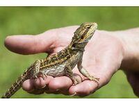 Reptile Boarding / Sitting and Reptile Advice