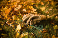 Jardinage d'automne/ Gardening Fall cleanup