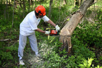 Landscaping Arborist Tree Removal Lawn Care