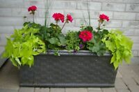 Large planter with plants