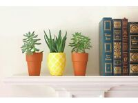 Wanted: Pot plants (light enough to carry)