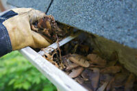 Gutters & downspout cleaning. Free Estimate. INSURED