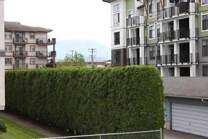 2 bdrm Condo in  Adult Oriented Bldg, Chilliwack BC