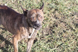 ZIGSTER AND FRIENDS ARE UP FOR ADOPTION