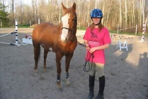 Gorgeous Paint Mare For Sale $2,000obo