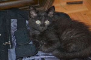 Kittens for Adoption - Storm Haven