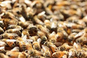 J'OFFRE UN terrain pour apiculteur ruche abeile